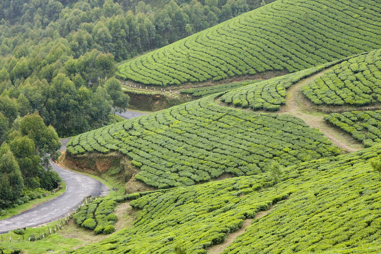 Darjeeling 2019, #1 places to visit in west bengal, top things to do